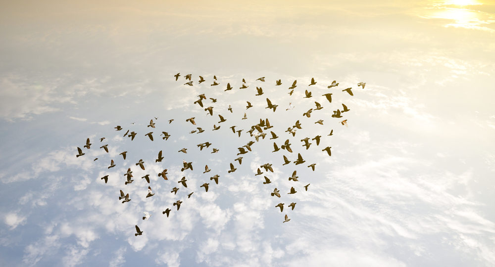 Flock of birds in shape of an arrow, flying towards the sun above the clouds.